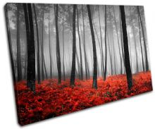 Stunning Forest Landscapes - 13-0775(00B)-SG32-LO